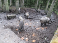 Ausflug Wildpark Hufeisen 12.10._10