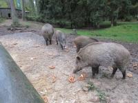 Ausflug Wildpark Hufeisen 12.10._12