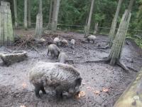 Ausflug Wildpark Hufeisen 12.10._9