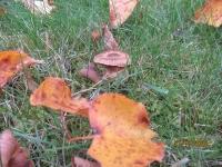 Herbsterkundung 21.10.20_2