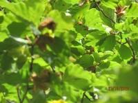 Herbsterkundung 21.10.20_4