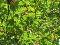 Herbsterkundung 21.10.20_5