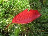 Herbsterkundung 21.10.20_6